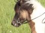 Pferdeleben auf Gut Ellenbach