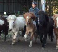 "17. - 18. März 2018 · ""Natural Horsemanship"" Kurs mit Helmut Bramesfeld   17. – 18. März 2018 – AUSGEBUCHT!!"